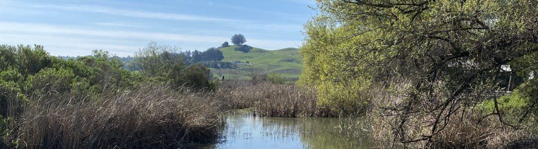 Petaluma River Wetlands
